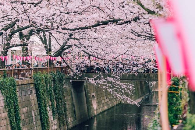 blossomcherrytrees6