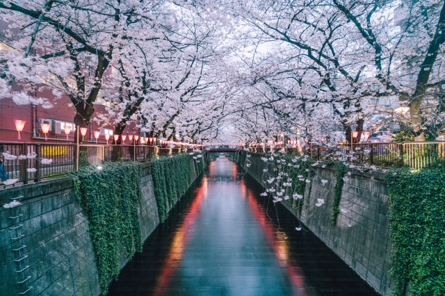 blossomcherrytrees8