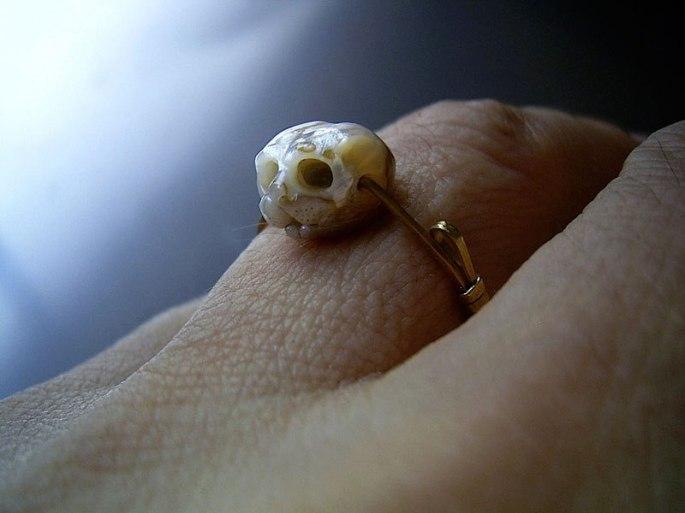 pearl-skulls-by-shinki-nakaba-7