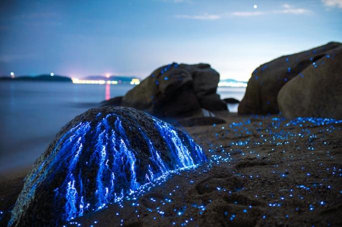 Xo2e5FYGvP8DGcV3c55X_Tbud_photo_sea_fireflies7