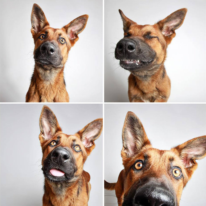 creativespotting.com-the-dogs-photo-booth-by-guinnevere-shuster-7