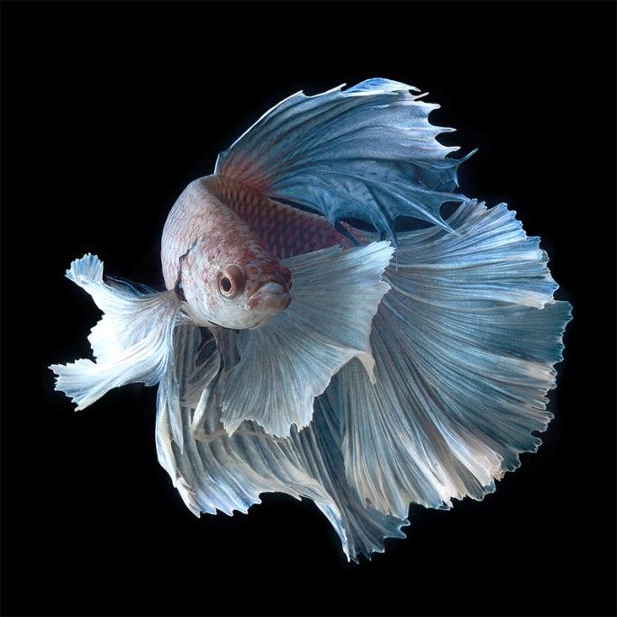 fish-16