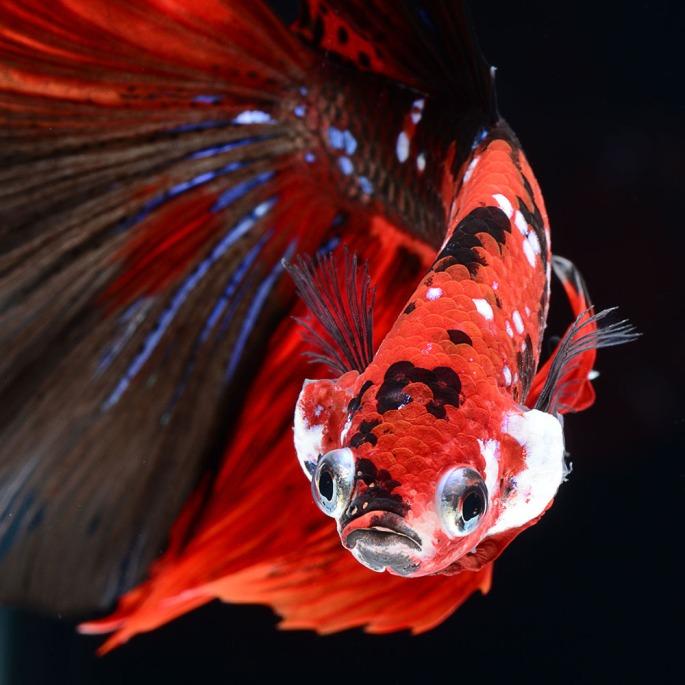 fish-18