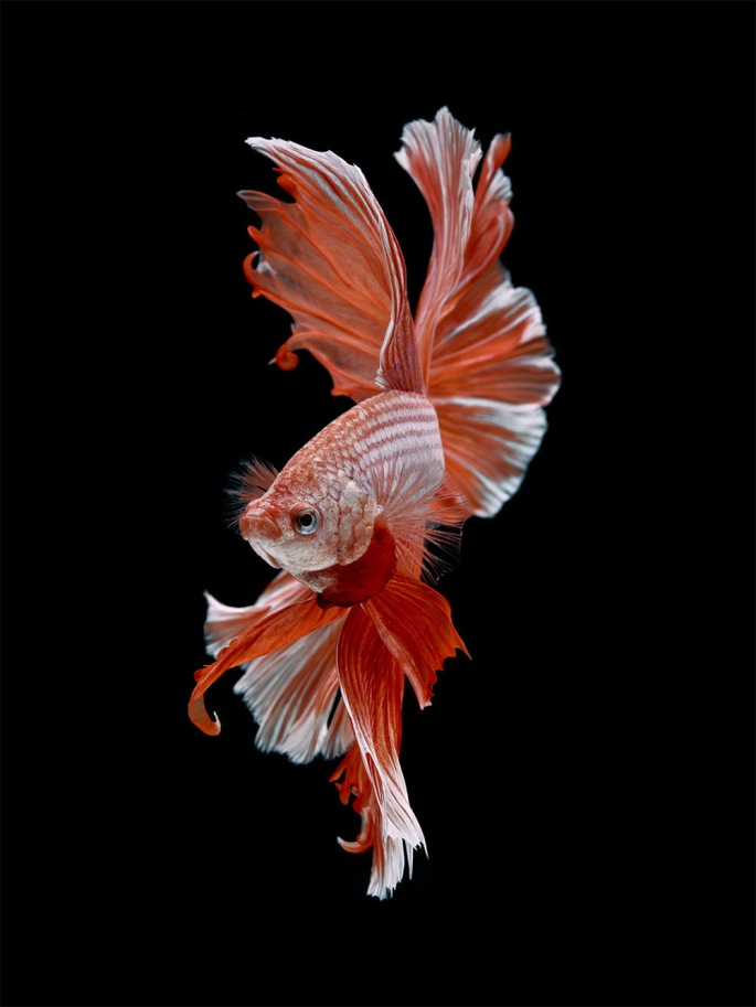 fish1-9