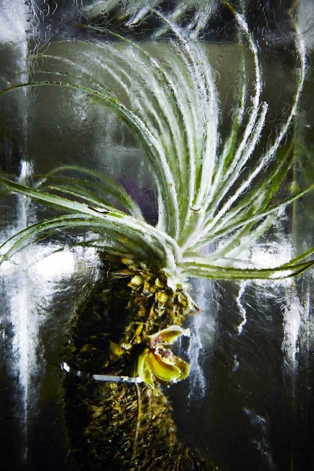 Flower-Bouquets-Frozen-in-Blocks-of-Ice-by-Makoto-Azuma-Yellowtrace-06