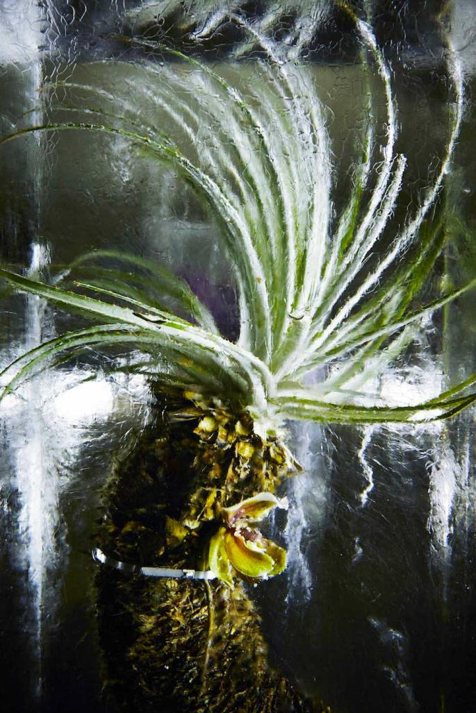 Flower-Bouquets-Frozen-in-Blocks-of-Ice-by-Makoto-Azuma-Yellowtrace-06