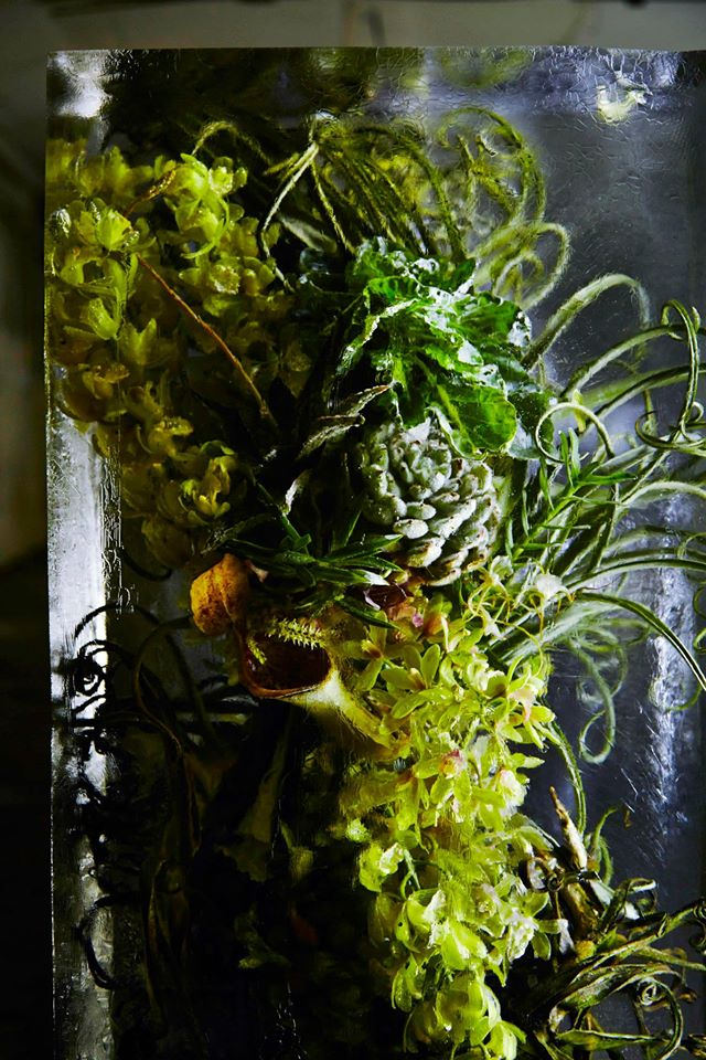 iced-flowers-makoto-azuma-9