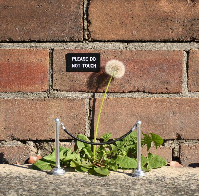 sign-flower - Copie - Copie