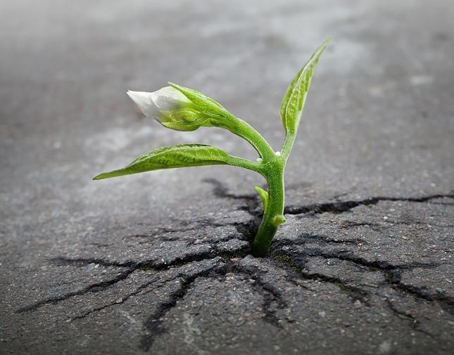 survie-plantes-milieux-hostiles- 1