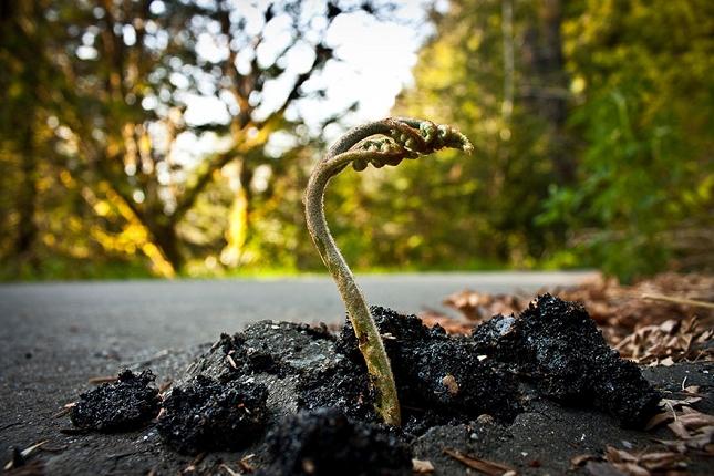survie-plantes-milieux-hostiles- 15 - Copie