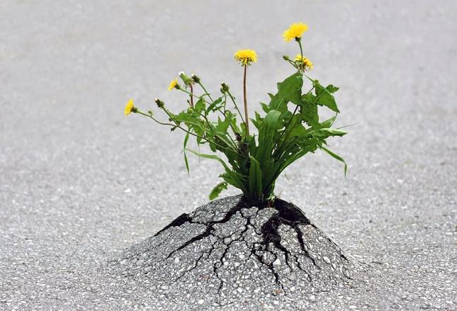 survie-plantes-milieux-hostiles- 17 - Copie - Copie