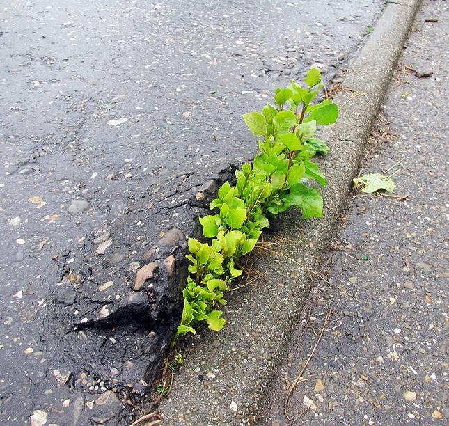 survie-plantes-milieux-hostiles- 18 - Copie - Copie