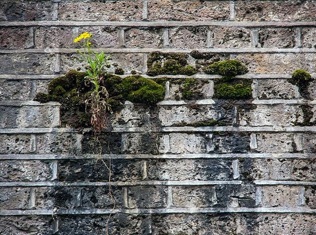 survie-plantes-milieux-hostiles- 19 - Copie - Copie