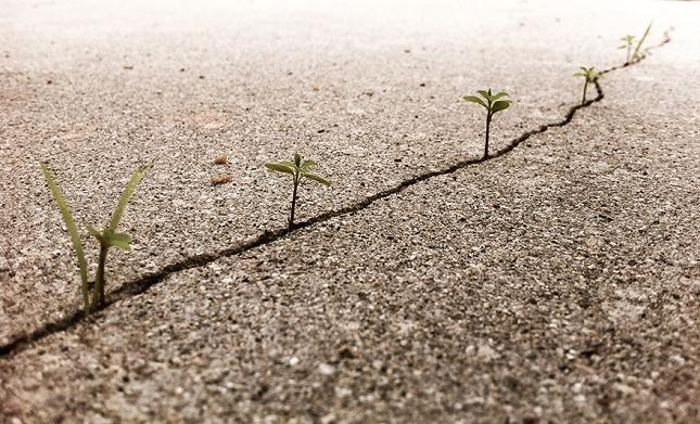 survie-plantes-milieux-hostiles- 25 - Copie - Copie