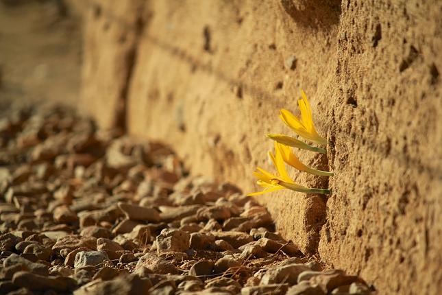 survie-plantes-milieux-hostiles- 5