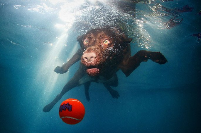 1329344107_water_dog_19 - Copie