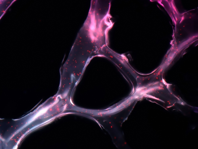 1489028466_561_years-best-biological-photos-capture-the-artistry-of-science.jpeg