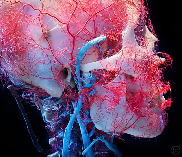 bodies-skulls-james-bareham-2