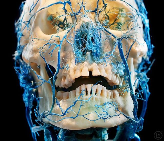 bodies-skulls-james-bareham-5