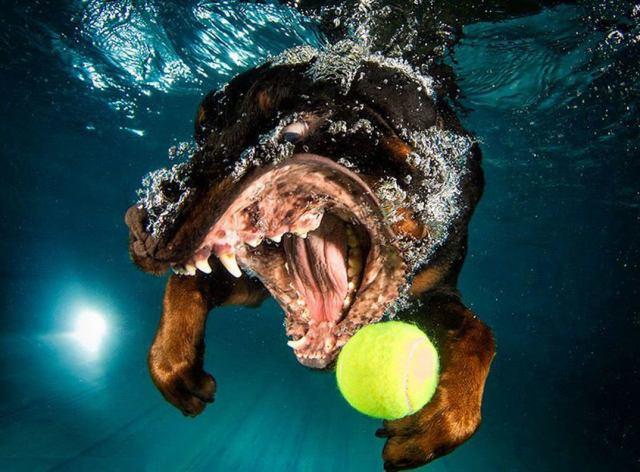 cara-perros-entrando-en-el-agua-11