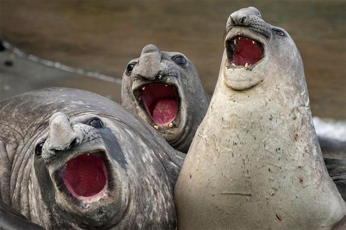 comedy-wildlife-photography-awards-2017-12-59646fa4d68f0__880