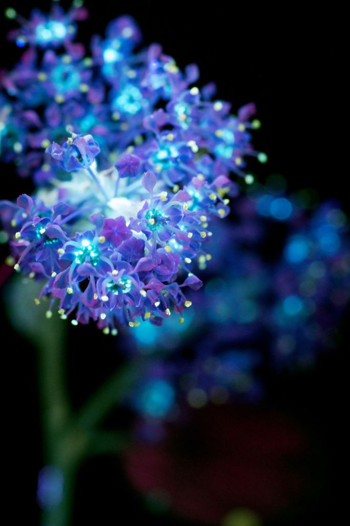 flowers-glow-in-dark-uv-photographs-27