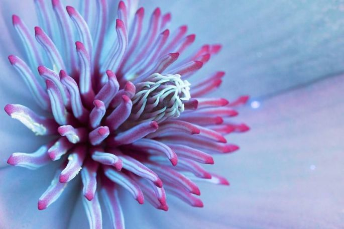 flowers-glow-in-dark-uv-photographs-38