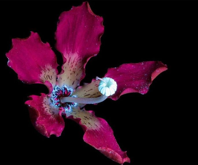 flowers-glow-in-dark-uv-photographs-40
