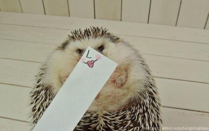 hedgehog-marutaro-paper-faces-twitter-6__880