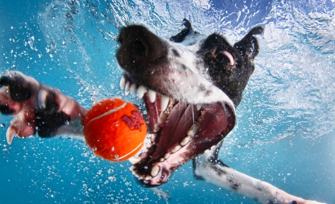 little-friends-photo-dogs-underwater-seth-casteel