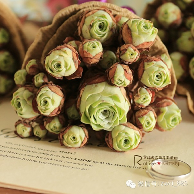 rose-shaped-succulents-greenovia-dodrentalis-71-58f9bac04fa57__700