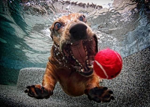 underwater-dog-2_2377686k