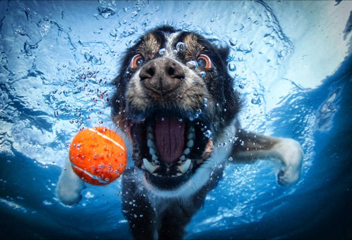 underwater12