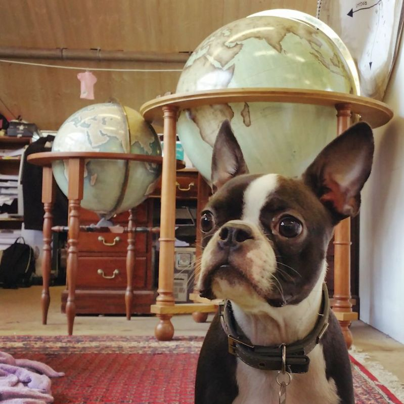 Our office dog George and some finished globe behind him - One Of The World's Last Remaining Globe-Makers That Use The Ancient Art Of Making Globes By Hand