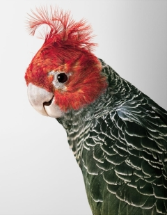 bird-portraits-leila-jeffreys-02
