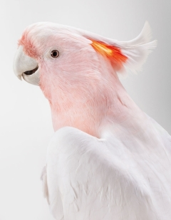 bird-portraits-leila-jeffreys-03