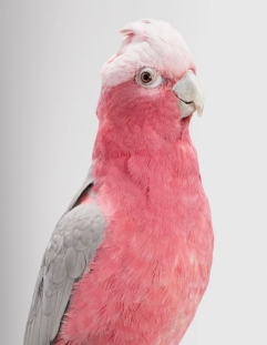 bird-portraits-leila-jeffreys-04