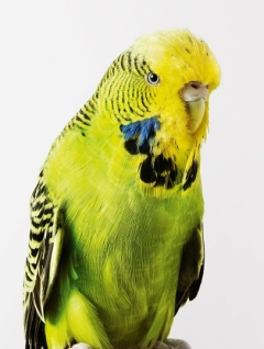 bird-portraits-leila-jeffreys-06