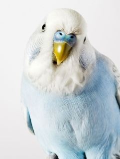 bird-portraits-leila-jeffreys-07