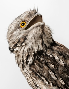 bird-portraits-leila-jeffreys-10