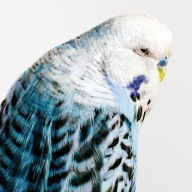 bird-portraits-leila-jeffreys-11