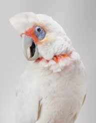 bird-portraits-leila-jeffreys-12
