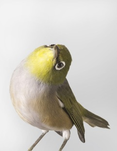 bird-portraits-leila-jeffreys-14