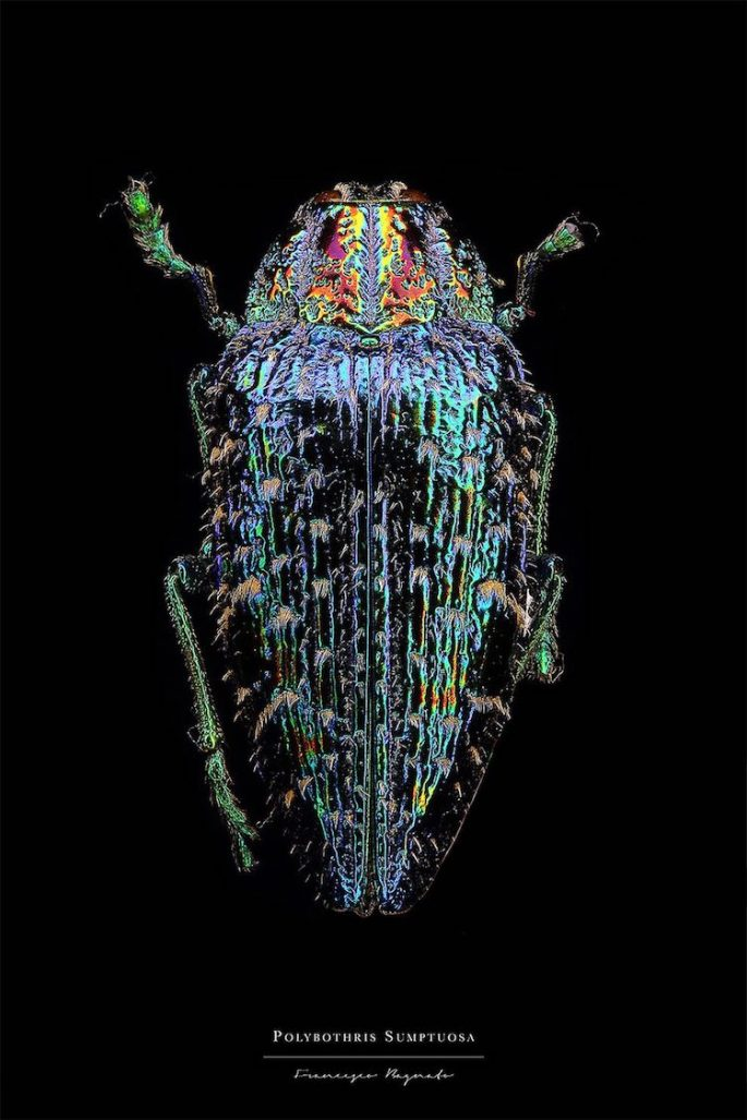 francesco-bagnato-insect-macro-photography-1