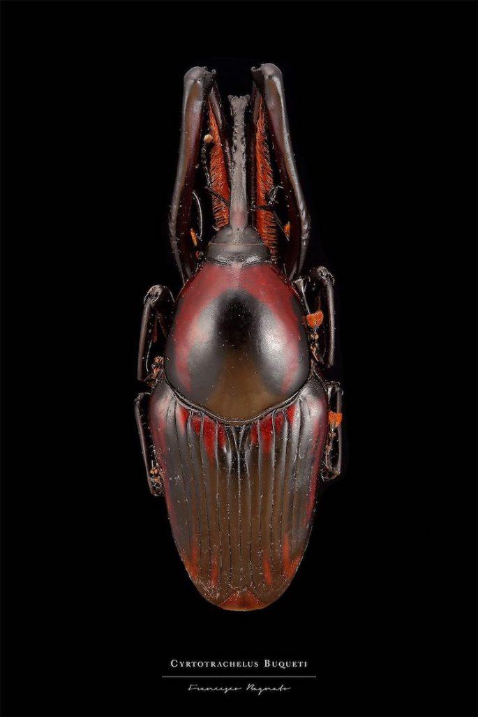 francesco-bagnato-insect-macro-photography-10