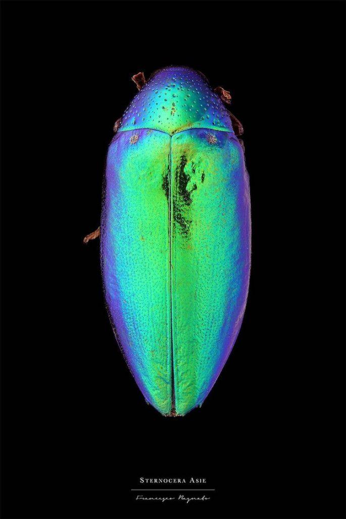 francesco-bagnato-insect-macro-photography-12