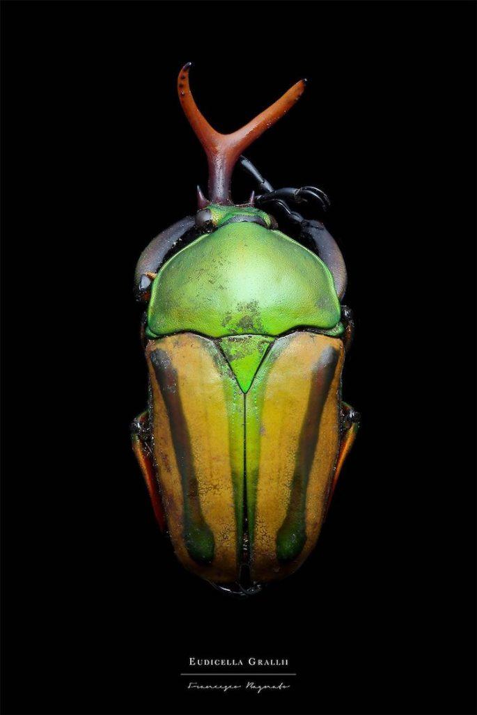 francesco-bagnato-insect-macro-photography-13