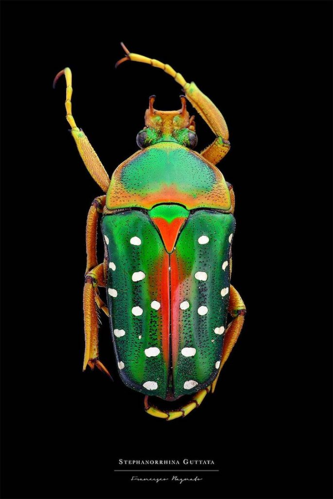 francesco-bagnato-insect-macro-photography-15