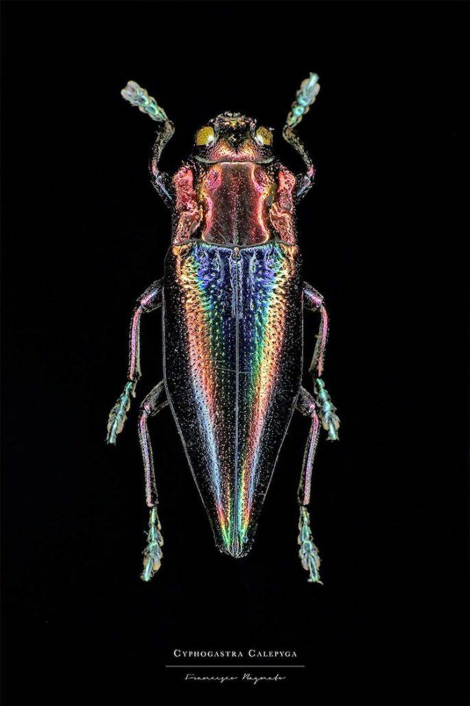 francesco-bagnato-insect-macro-photography-4