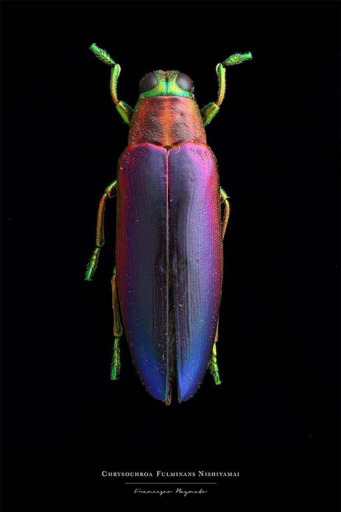 francesco-bagnato-insect-macro-photography-9